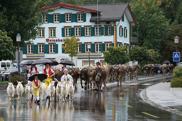Backpacking in der Schweiz - Kultur und Tiere