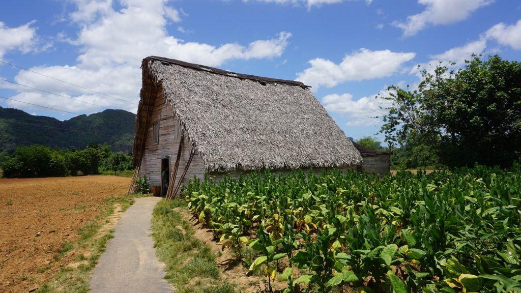 Backpacking auf Kuba - Tabakplantage, Viñales