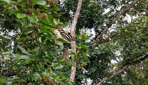 Tierwelt in Belize