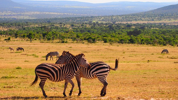 Wildlife Kenia