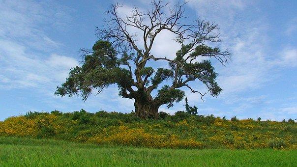 green landscape in Ethiopia