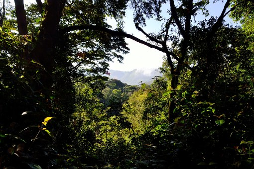 Bwindi-Wald in Uganda