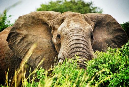 Elefanten-Safari in Uganda
